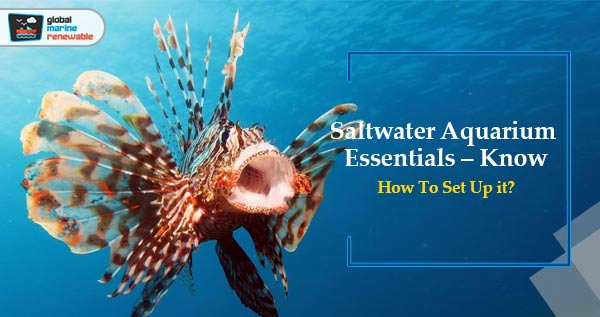 how-to-setup-a-saltwater-aquarium