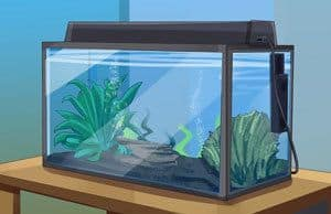 Checklist for Starting a Saltwater Aquarium