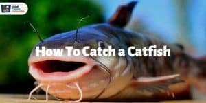 how to catch a catfish